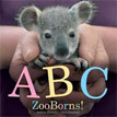*ABC ZooBorns!* by Andrew Bleiman, illustrated by Chris Eastland